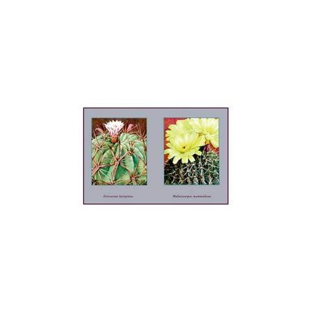 Ferocactus Latispinus Print (Unframed Paper Print 20x30)