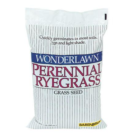 Barenbrug USA 5lb Perennial Rye Seed 22205