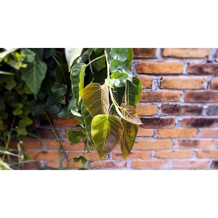 - LAMINATED POSTER Branch Tree Twig Season Leaves Plant Vine Poster Print 24 x 36