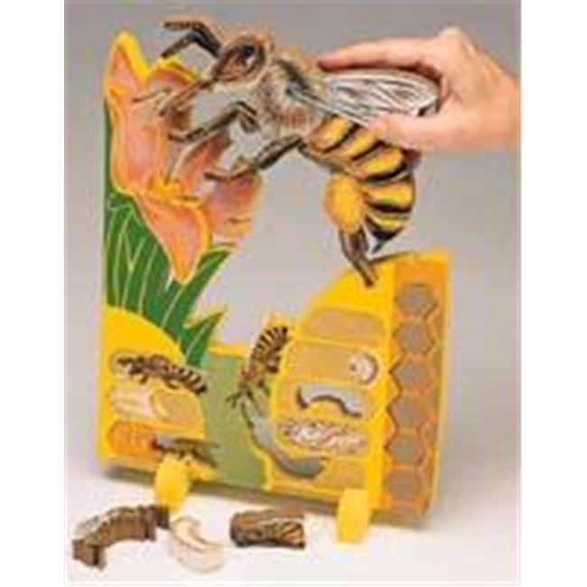 Olympia Sports 14562 Bookplus Model - Lifecycle of a Bee
