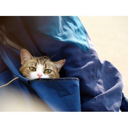 - Framed Art For Your Wall Cute Feline Bag Domestic Cat Bengal Eyes Pet 10x13 Frame
