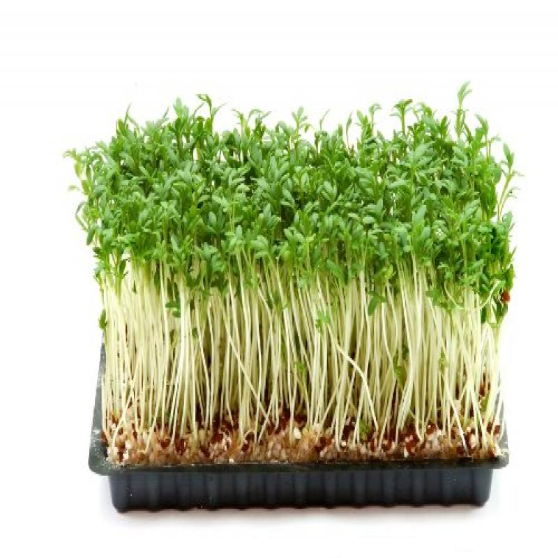 Cress, Curled Herb Seeds