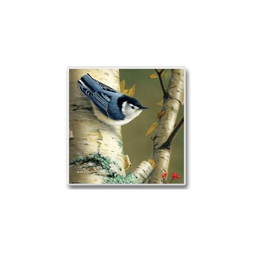 Highland Graphics Feathered Friends Coasters - Nuthatch