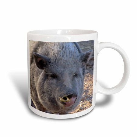 3dRose Pot Belly Pig, Ceramic Mug, 11-ounce