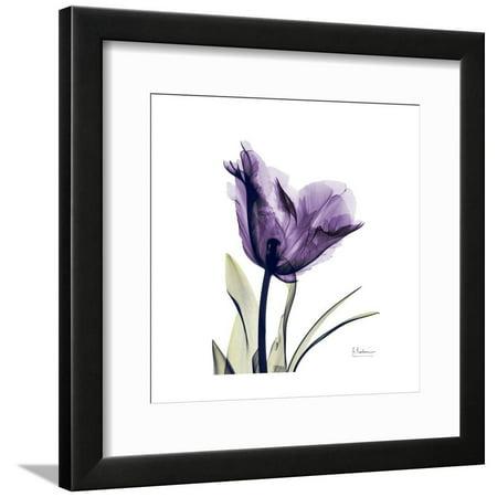 Royal Purple Parrot Tulip X-Ray Flower Photo Framed Print Wall Art By Albert Koetsier