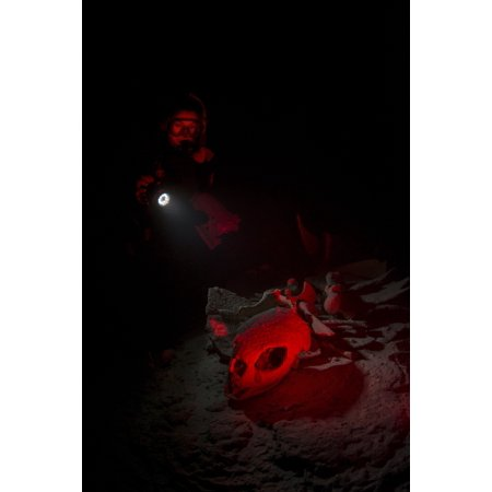 - Diver in underwater cave illuminating the skeleton of a dead turtle with a torchlight Palau Micronesia Poster Print