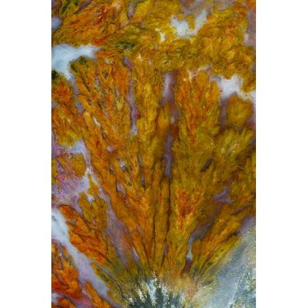 Plume Agate, Sammamish, Washington Print Wall Art By Darrell Gulin