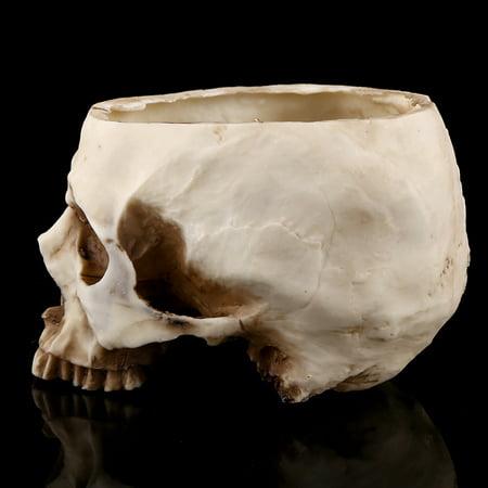 YLSHRF Skull Flowerpot 1Pc Resin Skull Head Design Flower Pot Planter Container Decoration Skull Plant Pot