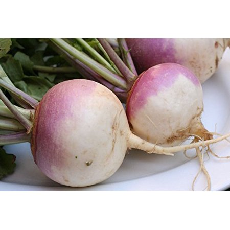 - Hirt's Gardens Purple Top White Globe Turnip - 25 Seeds