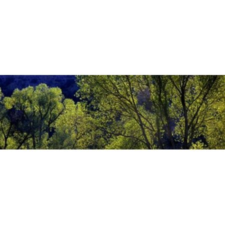 Cottonwood Trees Gila Hot Springs New Mexico Poster Print by Panoramic Images (36 x (Best Hot Springs In New Mexico)