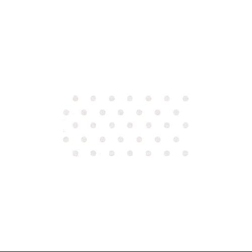 "Bazzill Dotted Swiss Cardstock 8.5""X11""-Salt/Dotted Swiss"