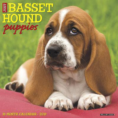 Just Basset Hound Puppies 2019 Wall Calendar (Dog Breed Calendar) (Other) - Basset Hound Costumes Halloween