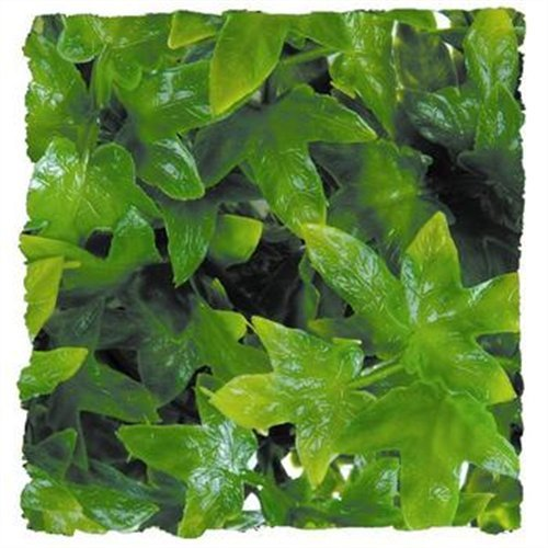 Laboratories SZMBU12 Natural Bushy Congo Ivy, Small, Your reptile will never know the difference By Zoo Med by