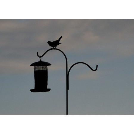 Canvas Print Animal Bird Silhouette Bird Feeder Perched Stretched Canvas 10 x - Silhouette Birds