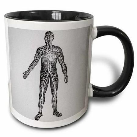 3dRose Vintage Medical Study Glass Slide the Human Circulatory System 1900 Coffee -