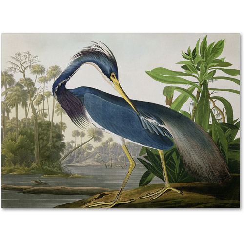 "Trademark Fine Art ""Louisiana Heron"" Canvas Art by John James Audubon"
