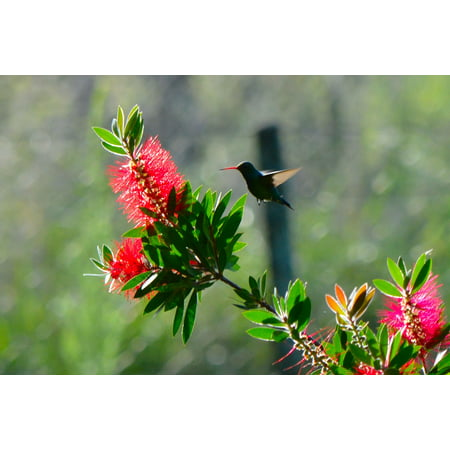 Canvas Print Bird Nature Animals Flight Ave Hummingbird Fast Stretched Canvas 10 x 14