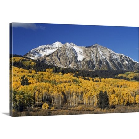 Great Big Canvas David Ponton Premium Thick Wrap Canvas Entitled Aspen Trees In Autumn  Rocky Mountains  Colorado