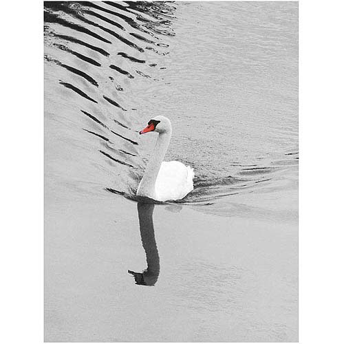 "Trademark Fine Art ""Swan"" Canvas Art by Patty Tuggle"