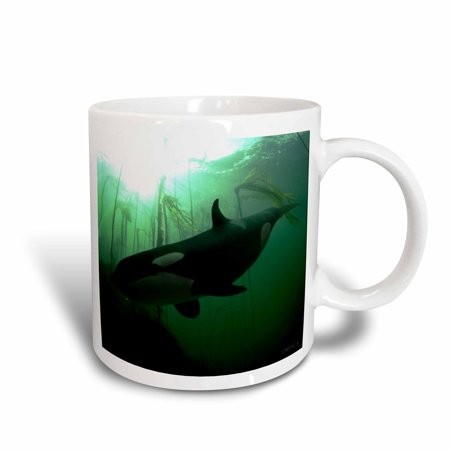 Mug Shot Background (3dRose Both the orca and the kelp forrest background were shot underwater in British Columbia, Ceramic Mug,)