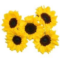 Sunflowers, 5 Stems