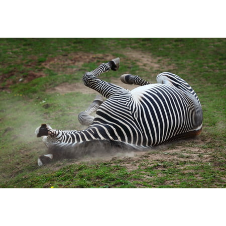 Peel-n-Stick Poster of Dust Dusty Animal Active Horse African AfricaPoster 24x16 Adhesive Sticker Poster Print