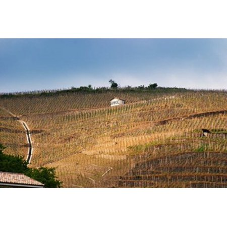 Terraced Vineyards in the Cote Rotie District Poster Print by Per Karlsson