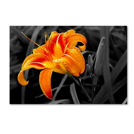 (Trademark Fine Art 'Orange Flower' Canvas Art by The Lieberman Collection)
