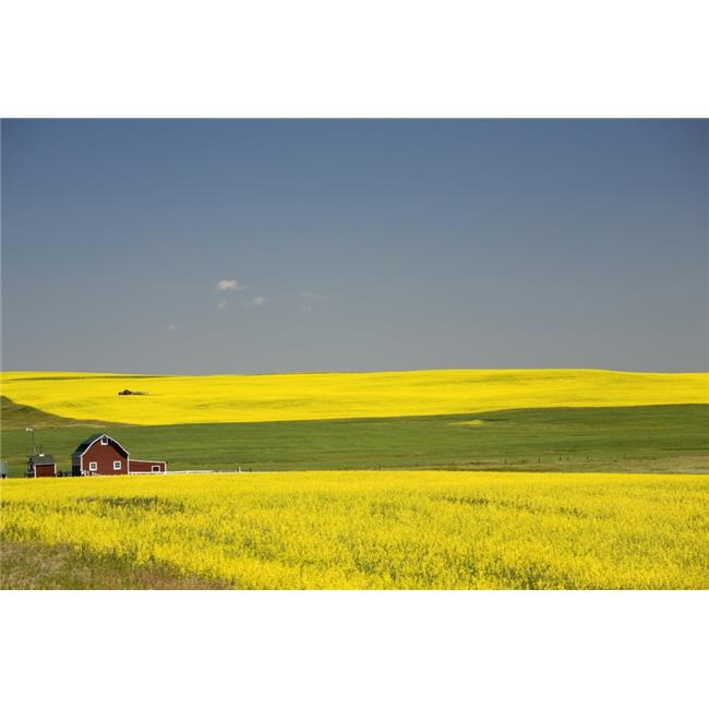posterazzi dpi1882657large flowering canola fields a red barn
