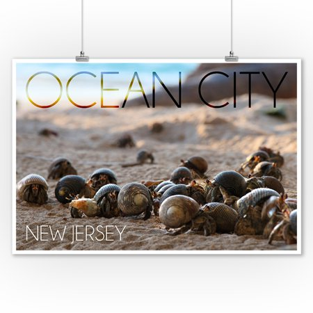Ocean City  New Jersey   Group Of Hermit Crabs   Lantern Press Photography  9X12 Art Print  Wall Decor Travel Poster