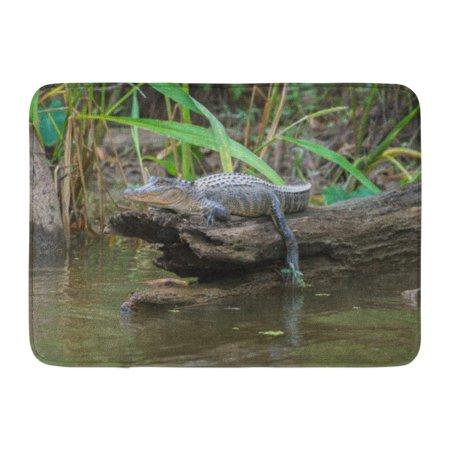GODPOK Tour Green Louisiana Honey Island Swamp American Alligator Bayou Gator Rug Doormat Bath Mat 23.6x15.7 (Honey Island Swamp Louisiana)