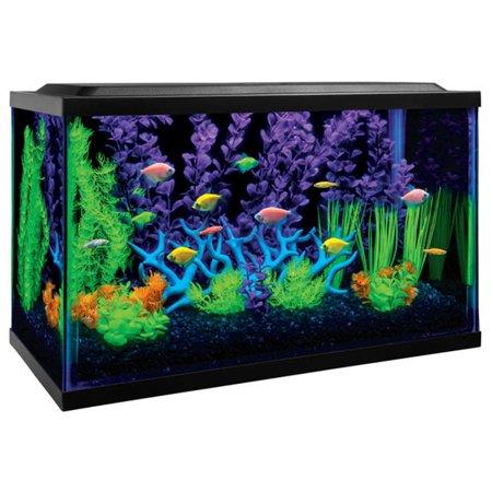 glofish 10-gallon value aquarium kit with free plants, fish food ...