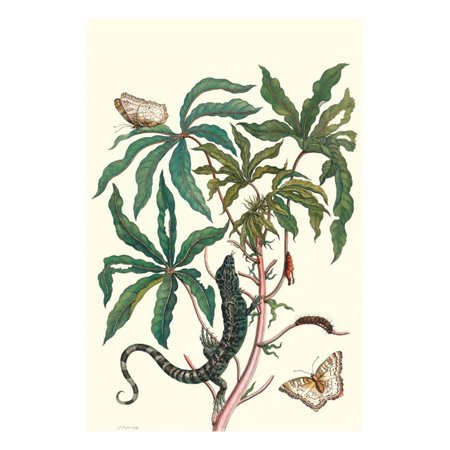 Peacock Butterfly with a Lizard Print Wall Art By Maria Sibylla Merian
