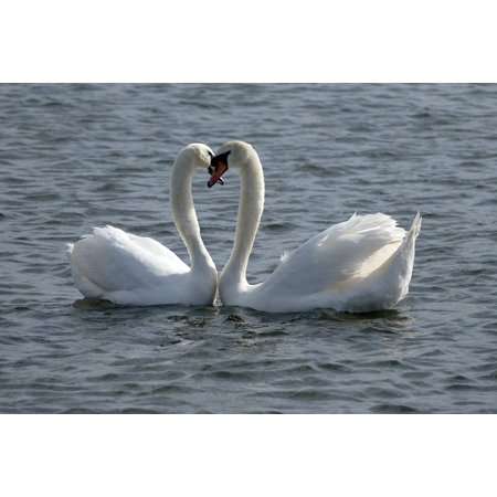 Framed Art For Your Wall Swan Heart Shape Lake Water Landscape Nature 10x13 Frame