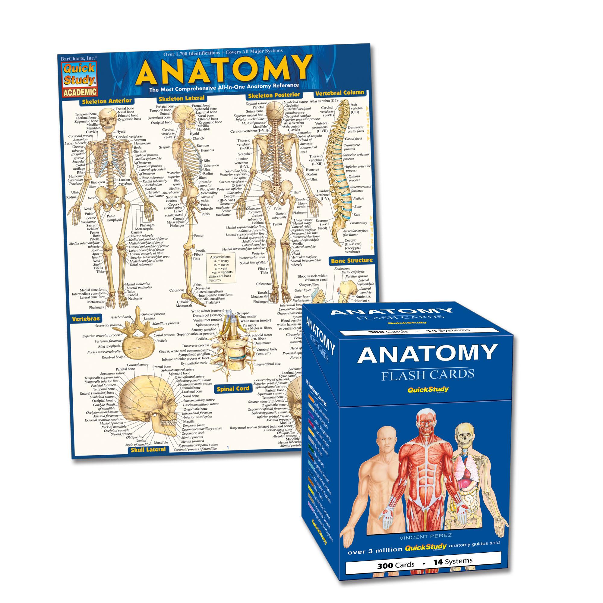Anatomy Quickstudy Bundle Walmart