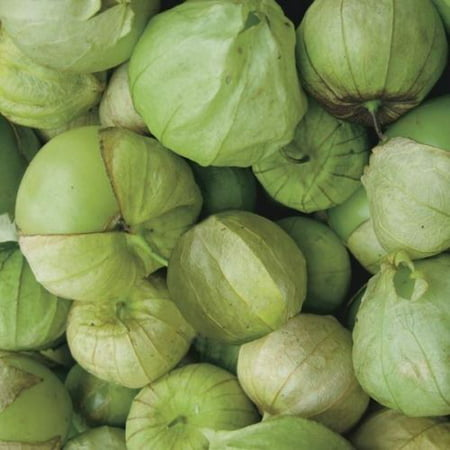 Tomato Tomatillo Toma Verde Great Heirloom Garden Vegetable 200 Seeds ()