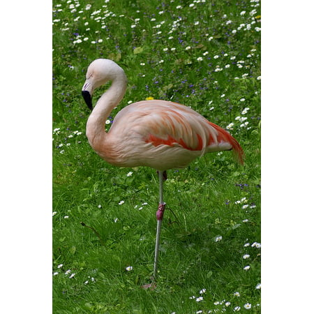 Canvas Print Grass Standing Bird Pink One Leg Flowers Flaming Stretched Canvas 10 x 14 - Orange Flame Grass