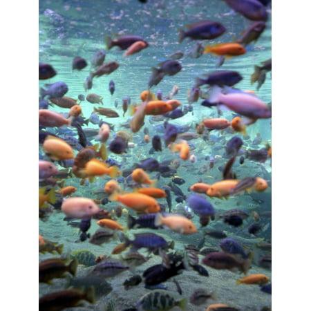 Fish Enclosure in Busch Gardens, Orlando Florida, November 2001 Print Wall Art ()