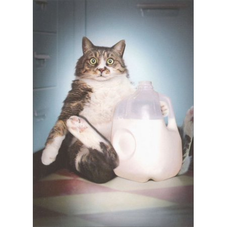 Avanti Press Cat With Milk Jug Funny / Humorous Birthday