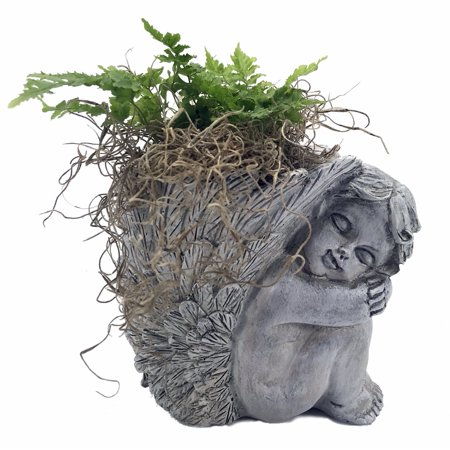 "Cherub Vase Planter with Live Miniature Fern Plant and Spanish Moss - 4"" x 4.5"""