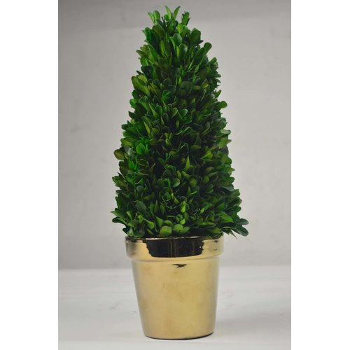 GT DIRECT CORP Tower Desktop Boxwood Topiary in Planter