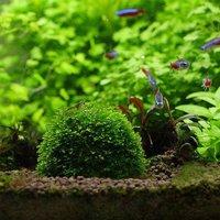 Aquarium Transparent Landscaping Plants Holder Floating Moss Ball for Aquarium Decoration