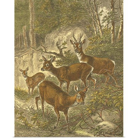 Small Roe Deer (Great BIG Canvas | Rolled Friedrich Specht Poster Print entitled Small Roe Deer)