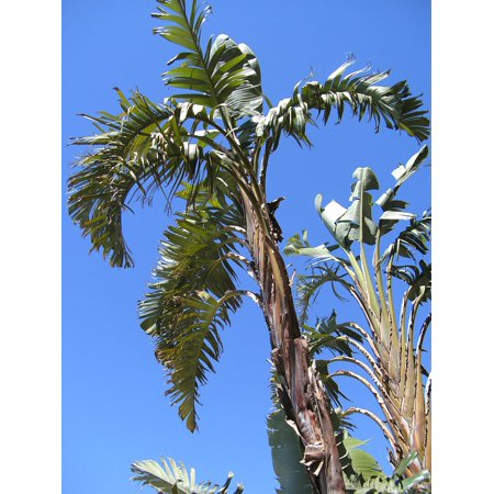 LAMINATED POSTER Frond Exotic Sky Holiday Travel Palm Fronds Palm Poster Print 24 x 36