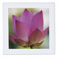 3dRose Bloom of Lotus Flower, Bangkok, Thailand-AS36 RYO0110 - Russell Young - Quilt Square, 14 by 14-inch