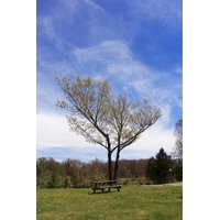 LAMINATED POSTER Peaceful Picnic Table Seat Tree Shady Tree Picnic Poster Print 24 x 36