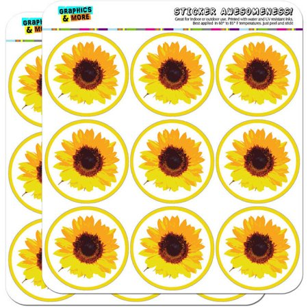 Sunflower Shower 18 2
