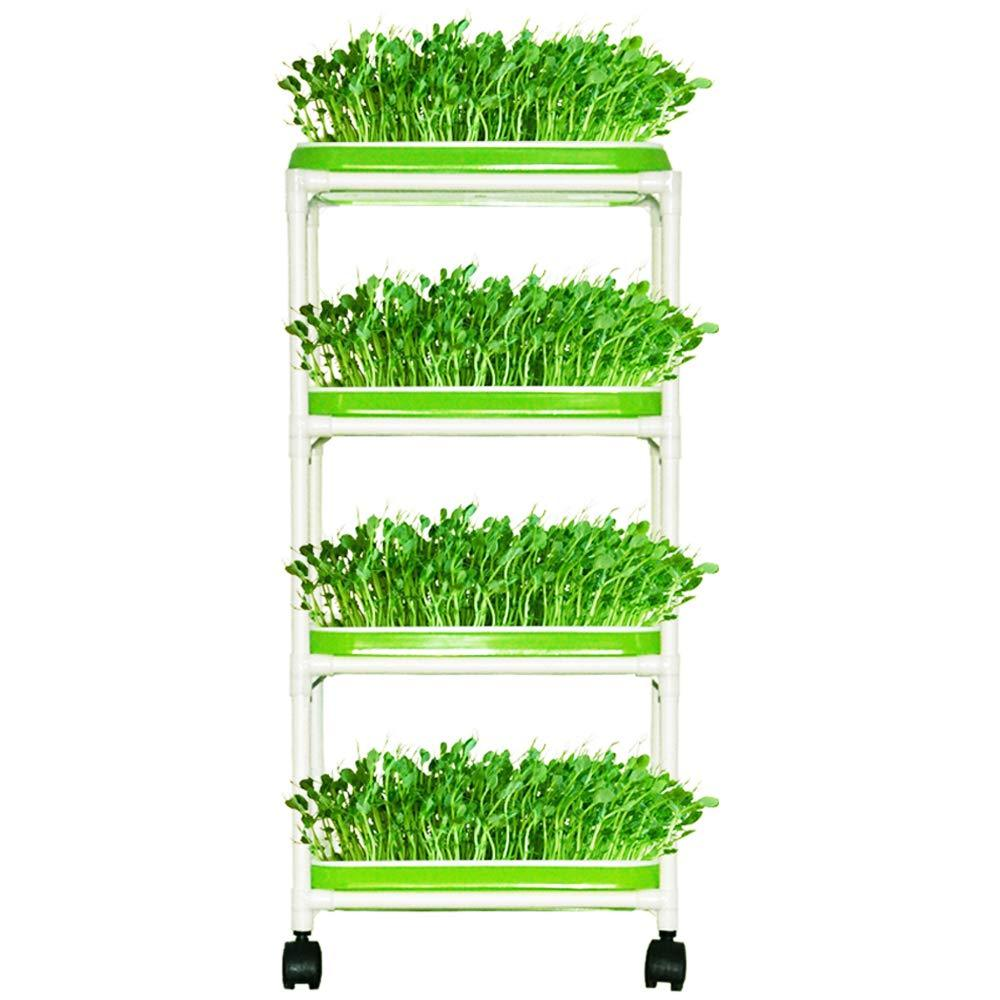 Seed Sprouter Double Layers Sprout Trays with Solid Wood Support Frame BPA Free PP Soil-Free Big Capacity Healthy Wheatgrass Seeds Grower Sprouting Kit 14.3x10.4 inches 2 Layers