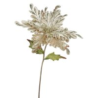"Vickerman 31"" Champagne Poinsettia, 15"" Flower 3/B"