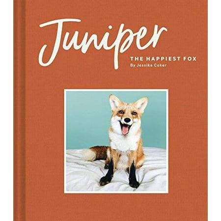 Juniper: The Happiest Fox - image 1 of 1
